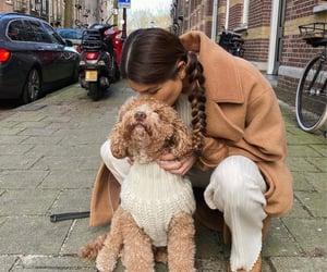 animals, goals, and dog image