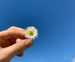 blue, flower, and hands image