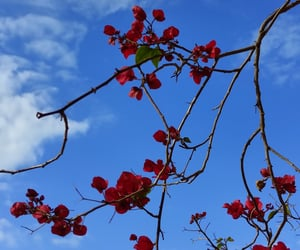 blue, flowers, and maroon image