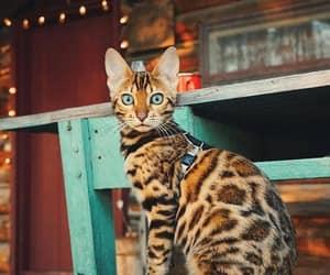 kittens, kitties, and kitty image