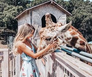 animal, joy, and laugh image
