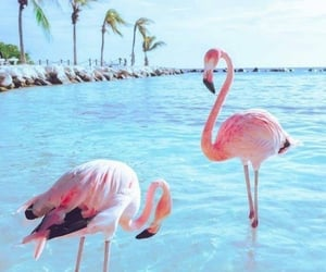 blue, flamingo, and ocean image