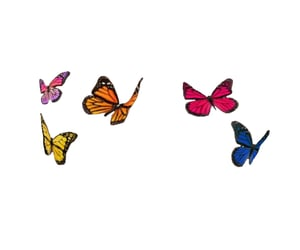 butterflies, colorful, and textures image