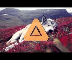dog, electro house, and video image