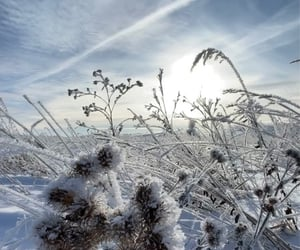 beautiful, beautiful pictures, and frost image