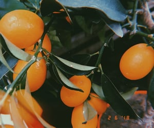 aesthetics, discover, and orange image