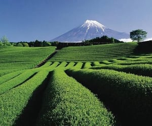 beautiful, green, and landscape image