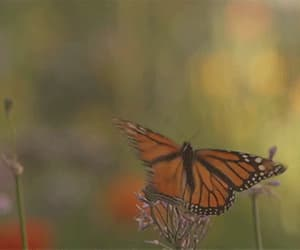 green, nature, and butterflies image