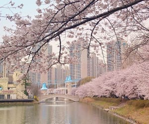 japan, kawaii, and korea image