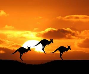 landscape, nature, and australia image