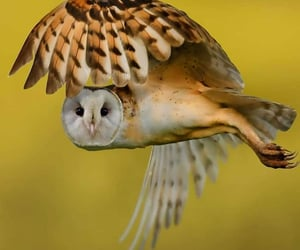 flight, Flying, and wildlife image