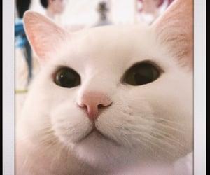 cat, bao, and lol image