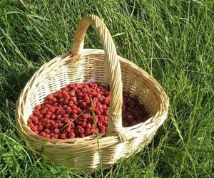 aesthetic, picnic, and raspberry image
