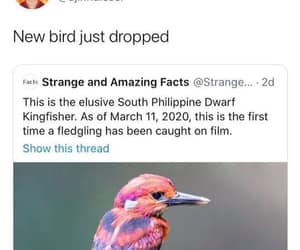 yea for birds!!, dwarf kingfisher, and south philippine image