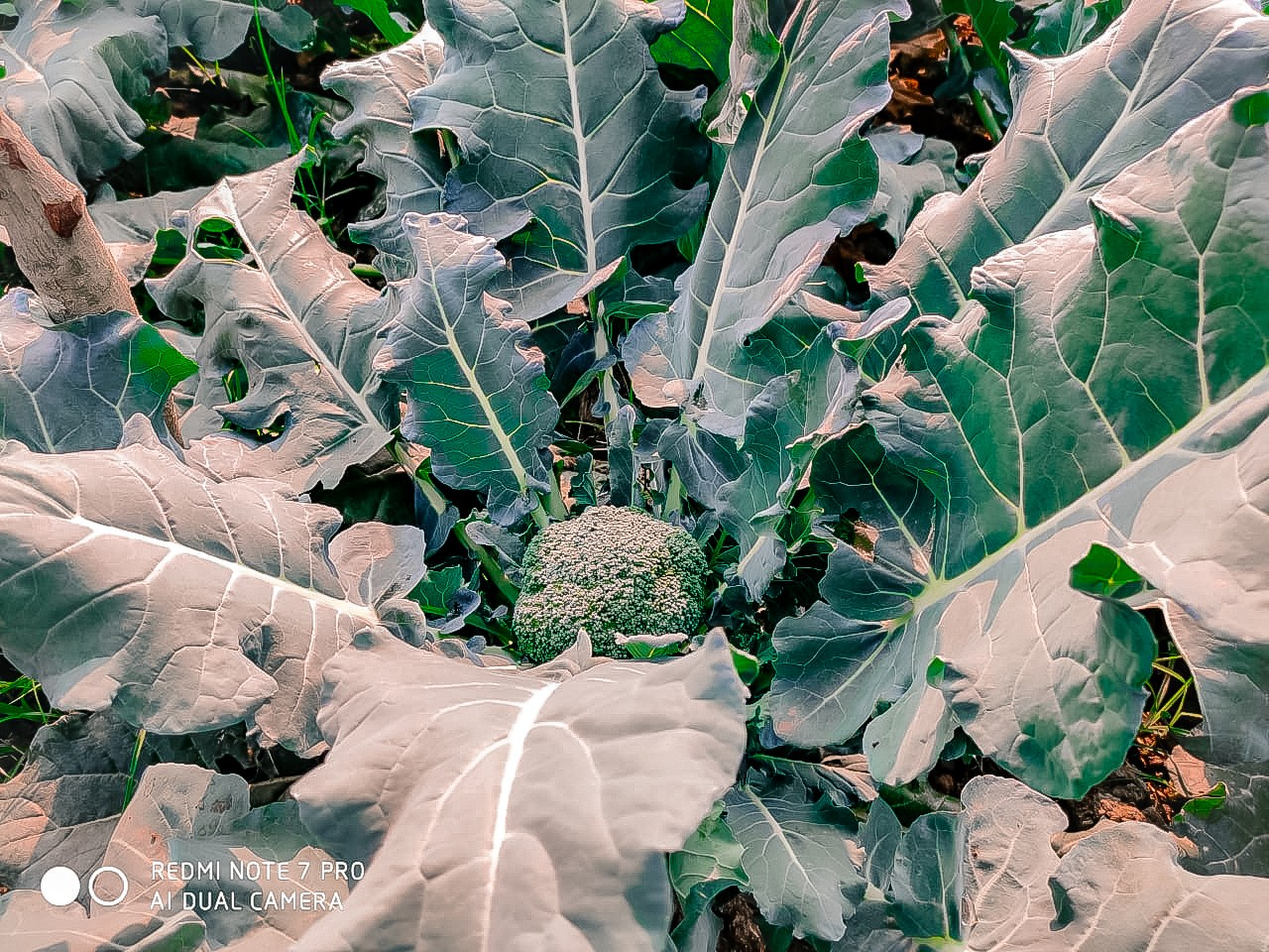 broccoli, nature, and photographer image