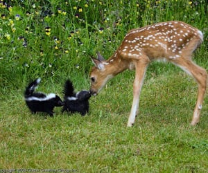 animal, deer, and skunk image