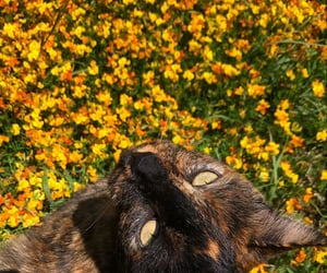 animals, cat, and colors image