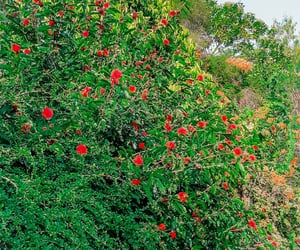 flowers, greenery, and tree photography image