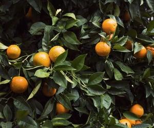 orange, nature, and fruit image