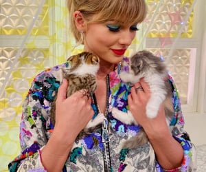 kitten, Taylor Swift, and tay tay image