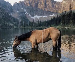 horse, lake, and mountain image