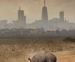 africa, Kenya, and urban image