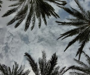 clouds, cloudy, and palmtrees image