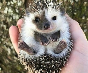 hedgehog, cute, and cottagecore image