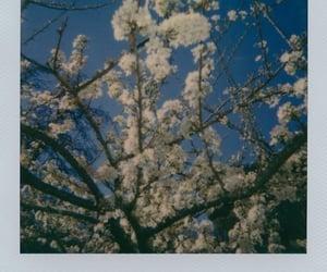 flowers, polaroid, and polaroid 600 image