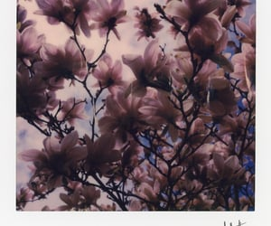 aesthetic, photography, and flowers image