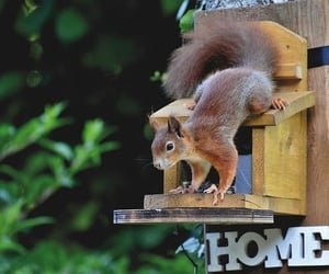 nature, seed, and squirrel image