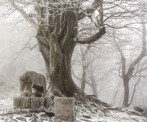 bear, tree, and winter image