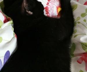 black, cat, and nap image