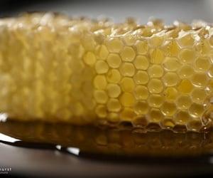 bee, honey, and sweet image