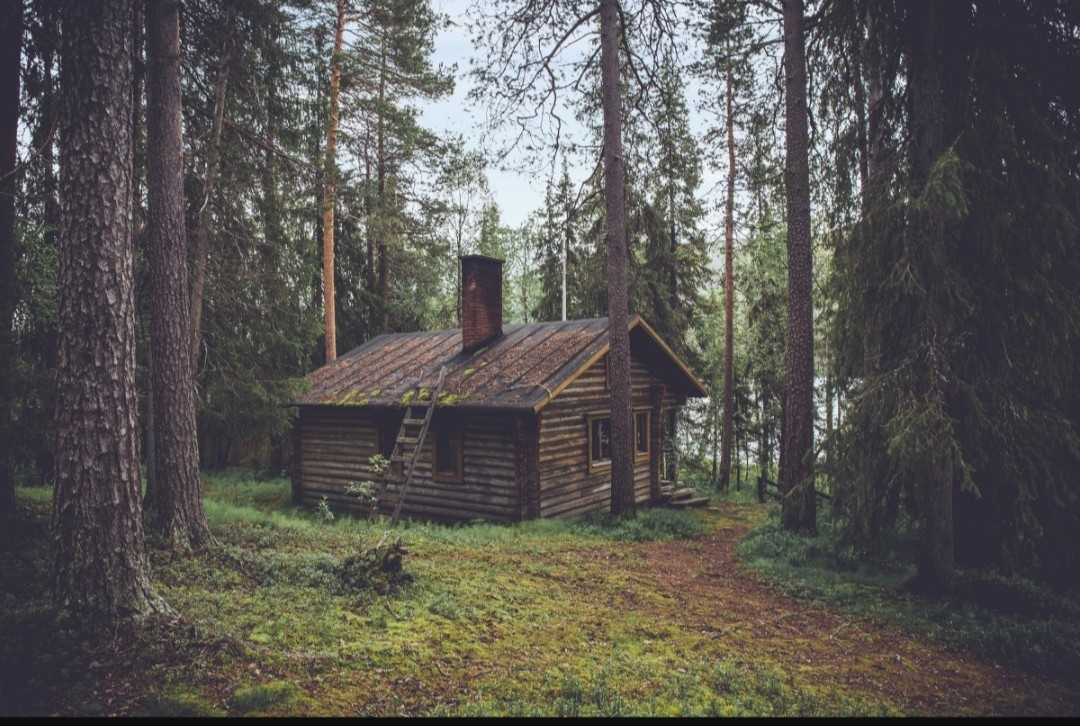 forest, cabin, and nature image