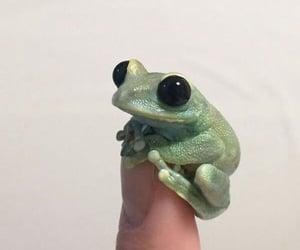 An adorable blinking frog!  (Photos: @Litoriacaeru)   Twitter