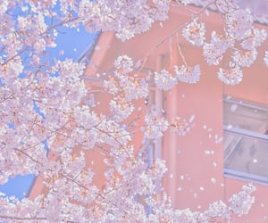 pink, cherry blossom, and peachy image