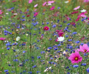 blue, flowers, and meadow image