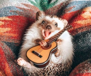 animals, guitar, and cute image