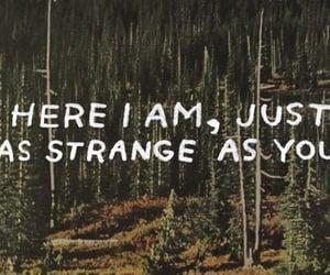 quotes, strange, and grunge image