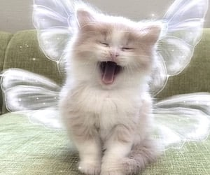 cat, animals, and edit image