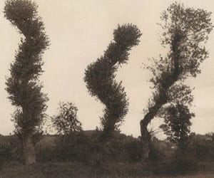 atmosphere, trees, and old photo image