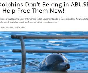 abuse, animal cruelty, and cruelty image