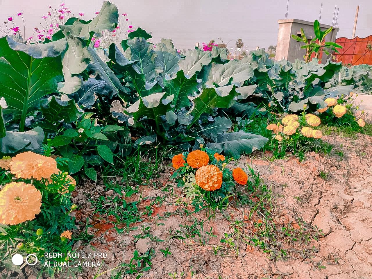 flowers, orange flowers, and yellow flowers image