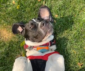 dog, otis, and pretty image