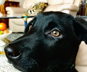 baby, dog, and lab image