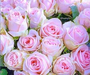 flower, instagram, and rose image