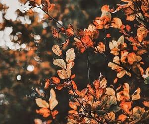 Képtalálatok a következőre: tumblr cozy nature
