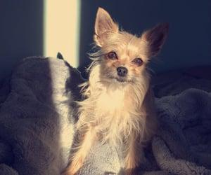 doggie image