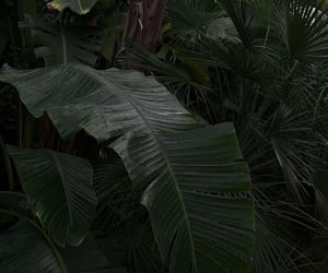 archive, tropical, and theme pics image